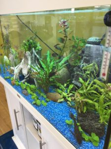 New Fish tank at Stock n Lock